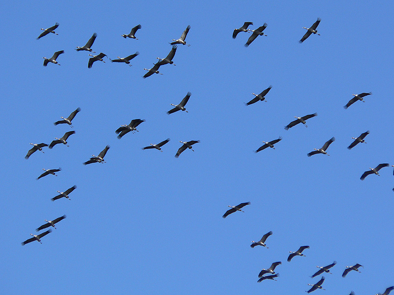 Autumn Migration Birding
